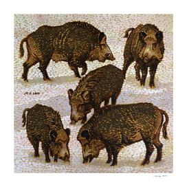 Five Wild Boars