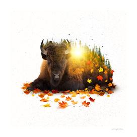 Equinox | Buffalo