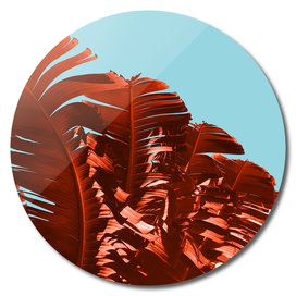 Tropical Wave