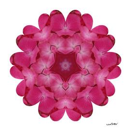 Pink Floral Mandala 0409