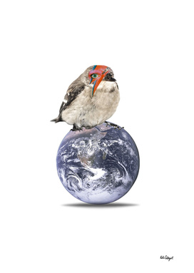ligthtening bolt bird