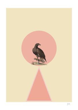 Bird in pink circle