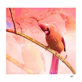 Cardinal Lady