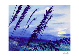 Blue reed