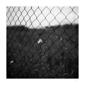 Puertas al campo