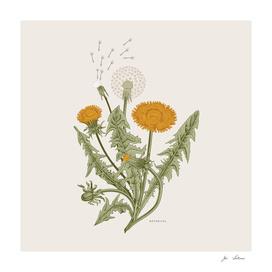 Botanical 02