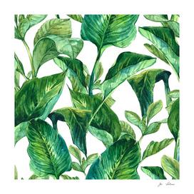 Plot Of Leaves