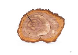 Wood stump slice of plum tree