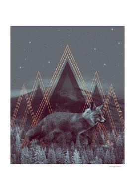 In Wildness | Fox