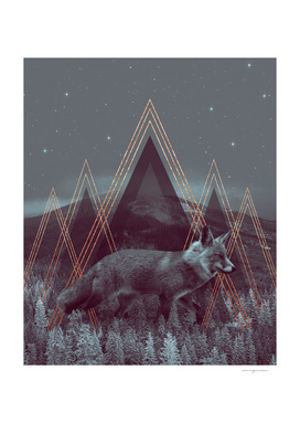In Wildness | Fox