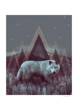 In Wildness | Wolf