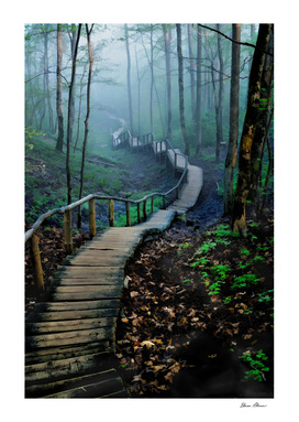 Meandering Through Foggy Woods