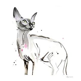 cat graphics