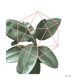 Geometric greenery