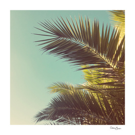 Autumn Palms
