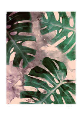 Monstera Theme 1
