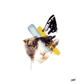 Paris Cat