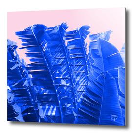 Sapphire Palm