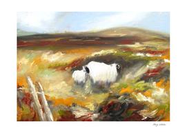 sheep in irish landscape