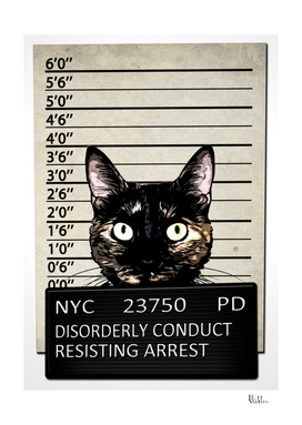Kitty Mugshot