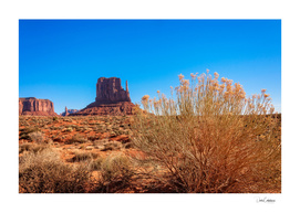 Golden flowers of the desert in Monument Valley