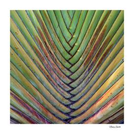 Sugar Beach Palm