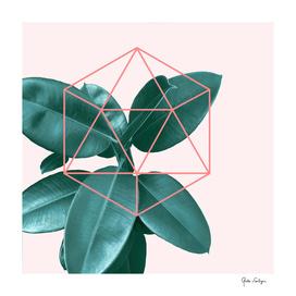 Geometric greenery II