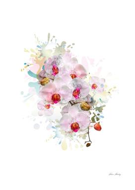orchids watercolour-01