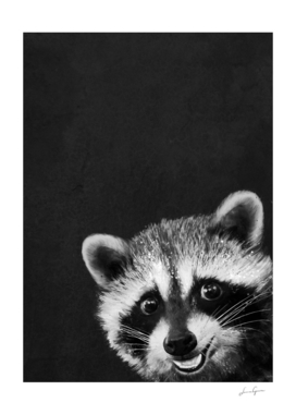 raccoon---I-m-not-sleepy-