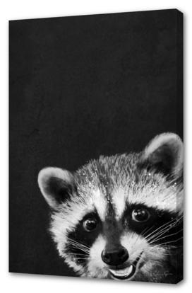 raccoon---I-m-not-sleepy-