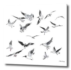 Seagulls pattern