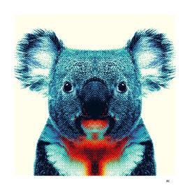 Koala - Colorful Animals