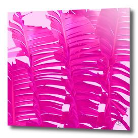 Pink Crush