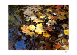 Leaves & Blue