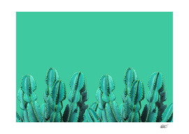 Turquoise Cactus