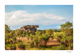 Almost typical Australian Landscape: green and gold