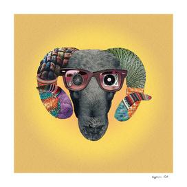 Hipster Sheep