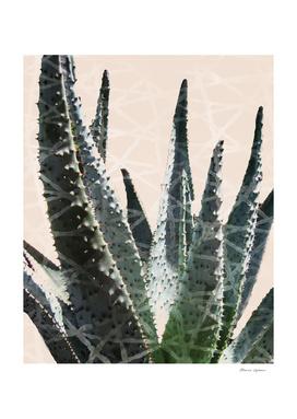 Cactus in the Grid