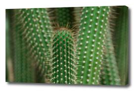 Cactus 02