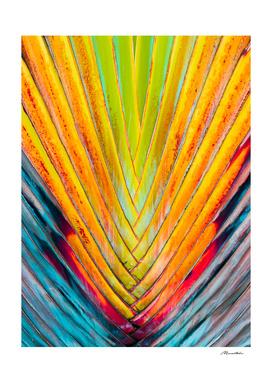 Colorful leaf detail