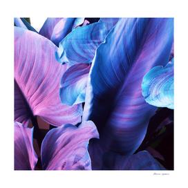 Leaves N.5