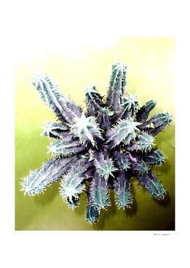 Succulent N.7
