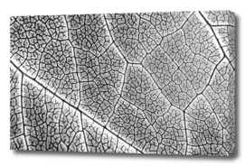Infrared Leaf Texture With Visible Stomata Cells
