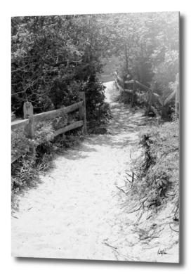 Beach Path 1