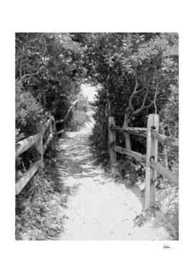 Beach Path 2