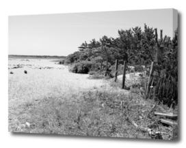 Barnegat Seascape