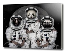 Capricorn 3 - Astronaut Animals group