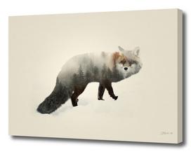 Fox   Double exposure