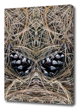 Mirrored Pine