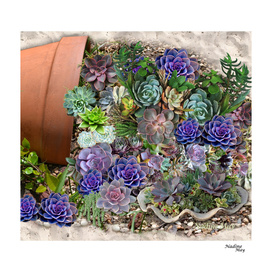 Succulents from South Africa